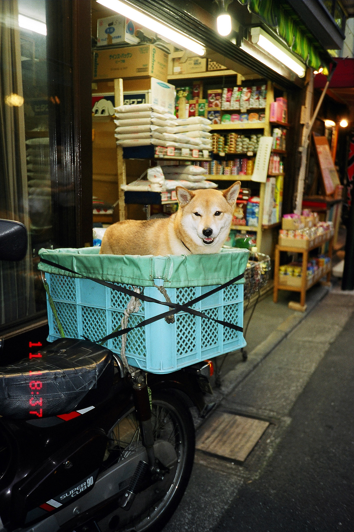 016 「金星 小川米店」の看板犬「ヤマト」渋谷区代々木1-42-12 20020511(2002.15.(23)15)