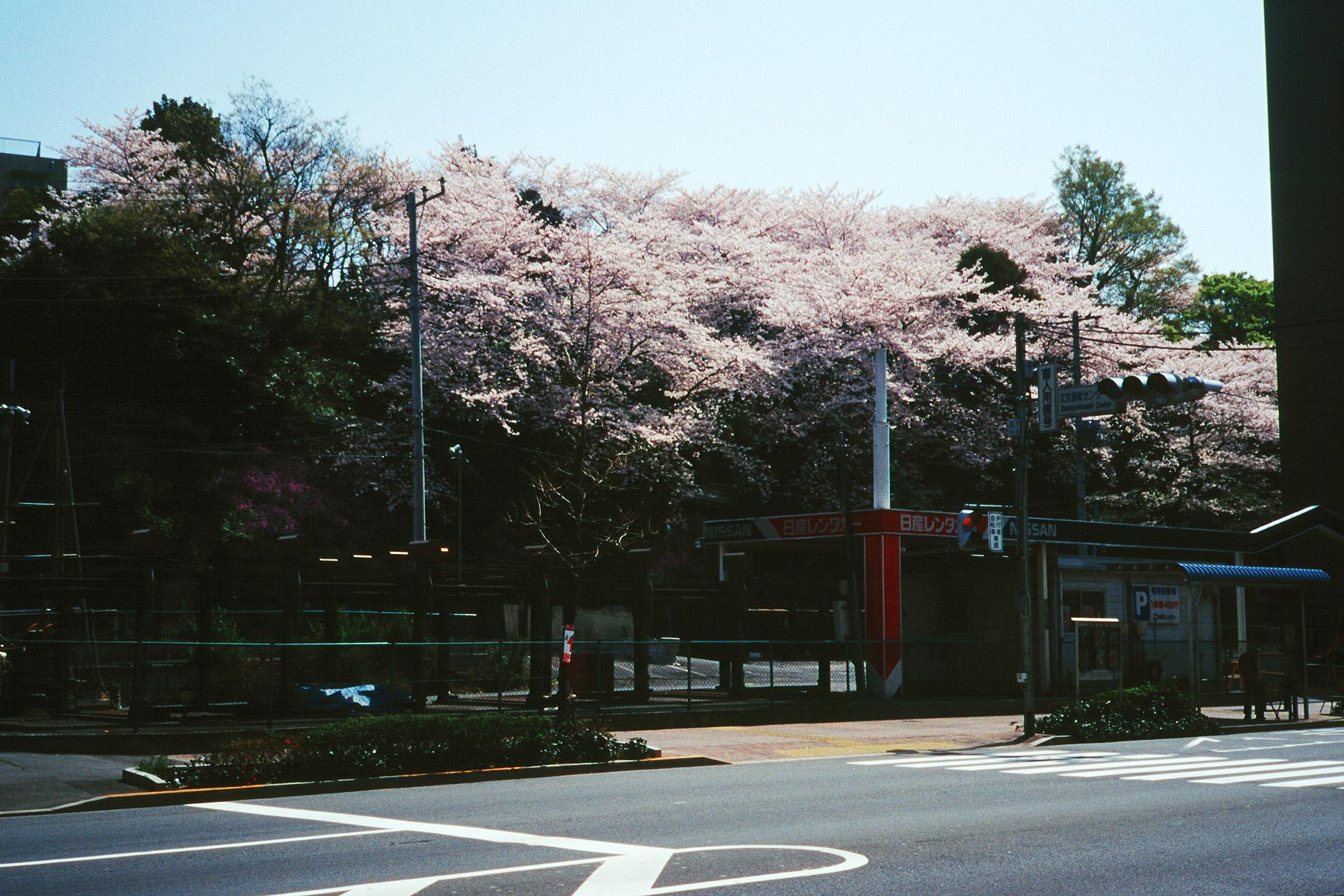 003_1 鳩山会館の桜 20000409(00.19.05)