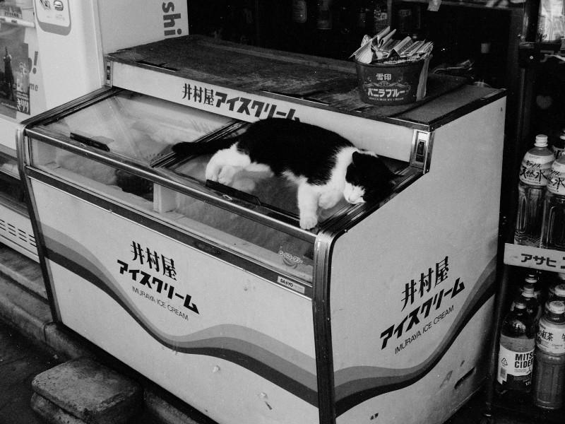 049_1 盛夏、店先の冷凍庫の上で涼む猫 新宿区市谷台町21-1 19940815(94.11.29)