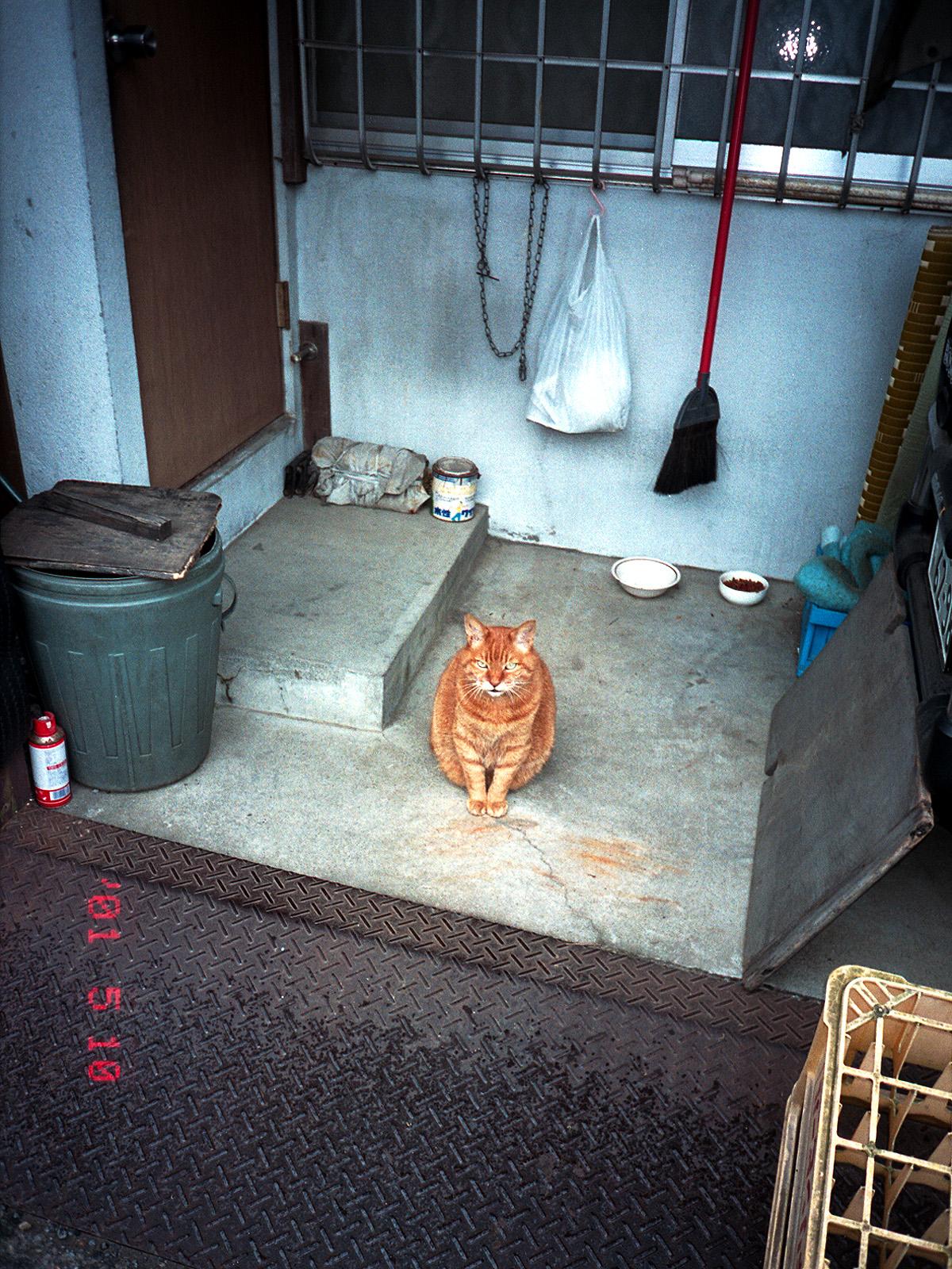 063_1 矢来町のナナちゃん 新宿区矢来町80 20010518(2001.5.10-3)
