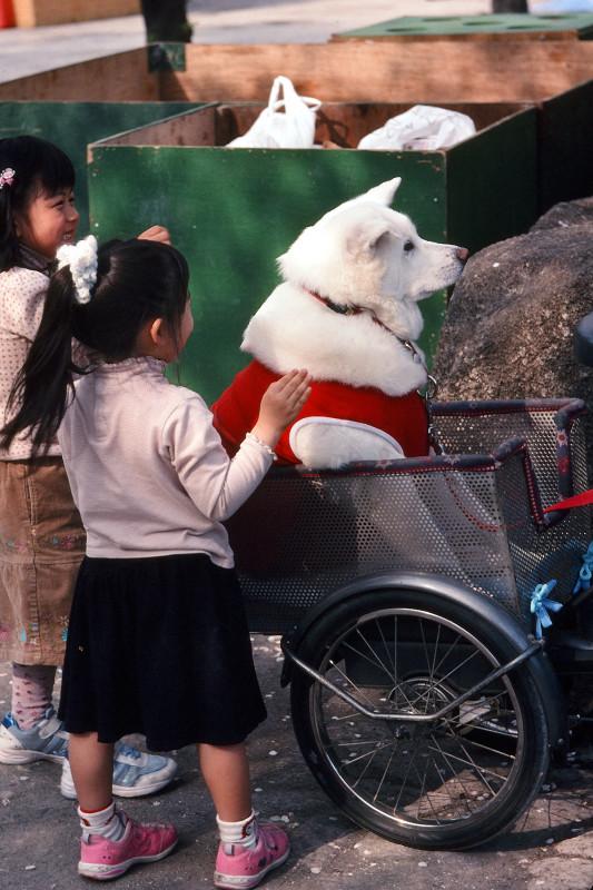 093 隅田公園桜まつりにて、老犬 隅田川右岸・言問橋あたり 20080403(08.28.13)
