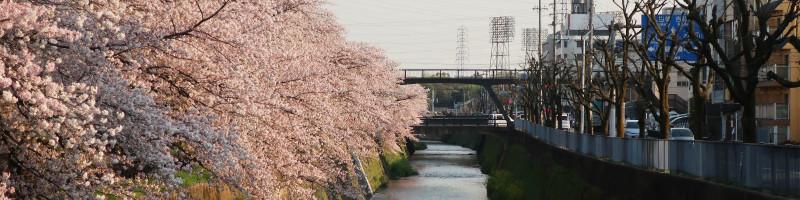 20170414_6 天神川、西万寿寺歩道橋(2017_0414_163651)
