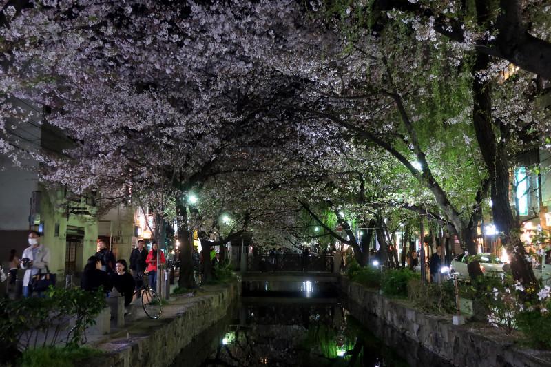 20180331_11 木屋町通の夜桜(2018_0331_195903)